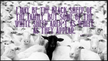 black-sheep-of-family-but-the-white-sheep-arent-as-white-as-they-appear